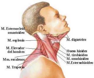 Duele el departamento de pecho de la columna vertebral y enmudecen las manos